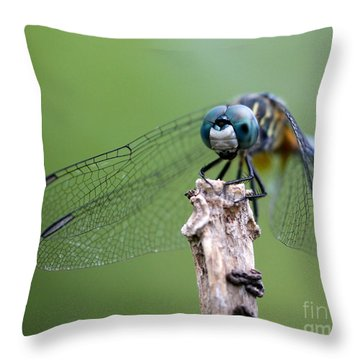 Big Eyes Blue Dragonfly Throw Pillow by Sabrina L Ryan