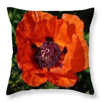 Throw Pillow featuring the photograph Big Red Poppy by Lynn Bolt