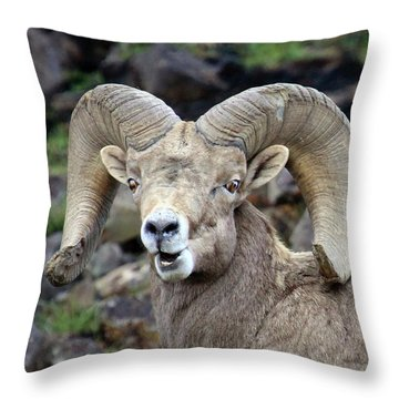 Throw Pillow featuring the photograph Bighorn Giant by Steve McKinzie