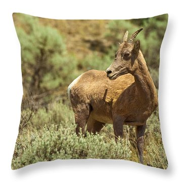 Bighorn Sheep Throw Pillow by Sebastian Musial