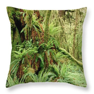 Bigleaf Maple Acer Macrophyllum Trees Throw Pillow by Gerry Ellis