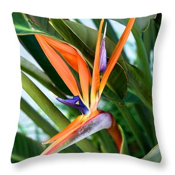 Throw Pillow featuring the photograph Bird by Joseph Yarbrough