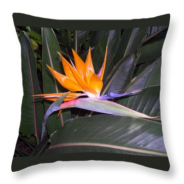 Throw Pillow featuring the digital art Bird Of Paradise by Claude McCoy