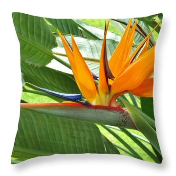 Bird Of Paradise Throw Pillow by Craig Wood