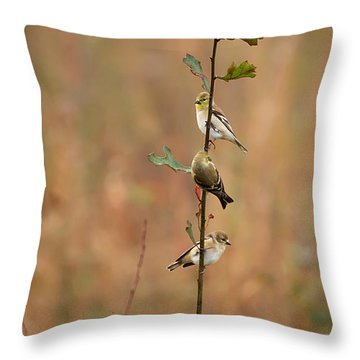 Bird Stack Throw Pillow by Dan Wells