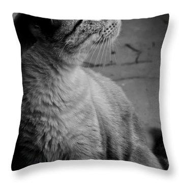 Bird Watching Throw Pillow by Kim Henderson