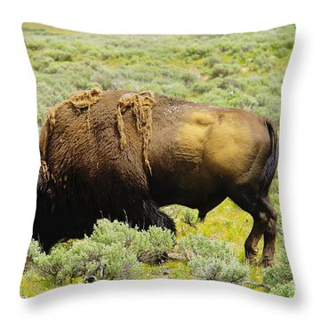 Bison Throw Pillow by Jeff Swan