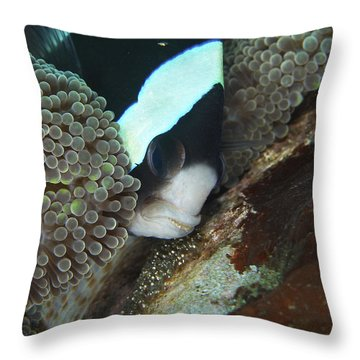 Black And White Anemone Fish Looking Throw Pillow by Mathieu Meur
