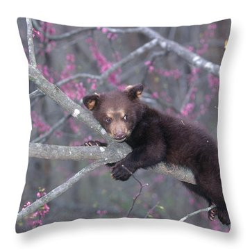 Black Bear Cub On Branch Throw Pillow by Alan and Sandy Carey and Photo Researchers
