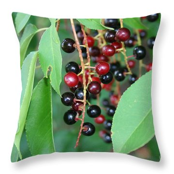 Throw Pillow featuring the photograph Black Beauty by Michael Waters