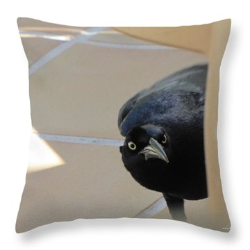 Throw Pillow featuring the photograph Blackbird Curiosity 0703 by Maciek Froncisz