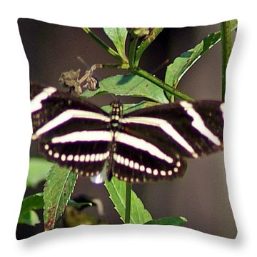 Black Butterfly Throw Pillow by Joe Faherty
