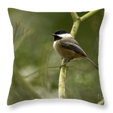 Black-capped Chickadee With Branch Bokeh Throw Pillow by Sharon Talson