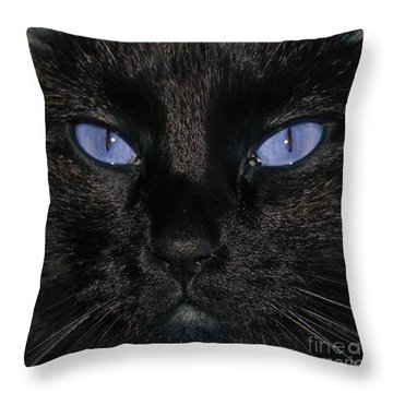 Black Cat Blue Eyes Throw Pillow by Paul Ward