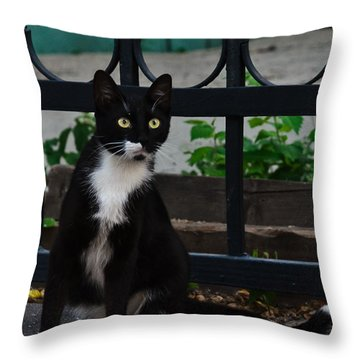 Black Cat On Black Background Throw Pillow