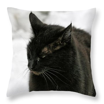 Black Cat White Snow Throw Pillow by Chriss Pagani
