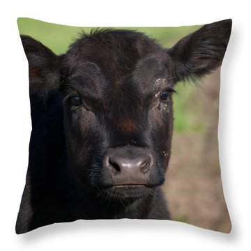 Black Cow Throw Pillow