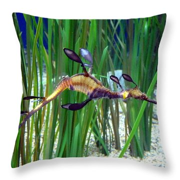 Throw Pillow featuring the photograph Black Dragon Seahorse by Carla Parris
