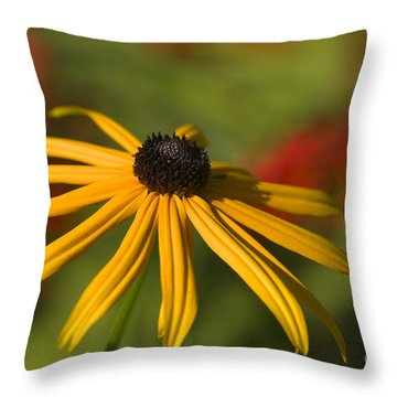 Black-eyed Susan 2 Throw Pillow by Sharon Talson