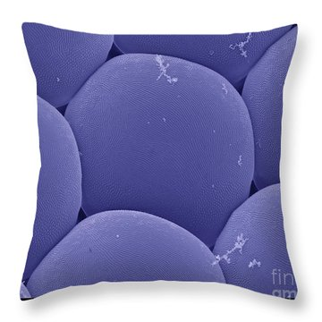 Black Fly Eye, Sem Throw Pillow by Ted Kinsman