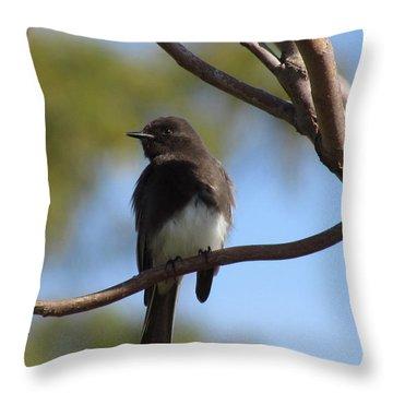 Black Phoebe Throw Pillow by Bonnie Muir