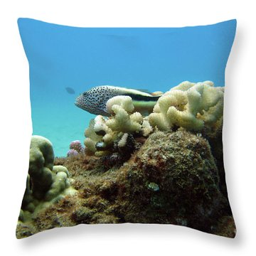 Black Side Hawkfish Throw Pillow by Suzette Kallen