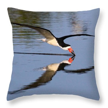Black Skimmer Throw Pillow by Paul Marto