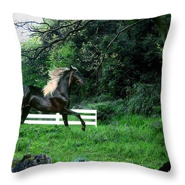 Black Stallion Throw Pillow by Kelly Turner