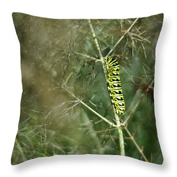 Black Swallowtail Butterfly Larva In Bronze Fennel Throw Pillow