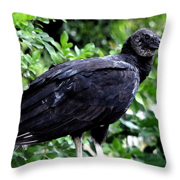 Throw Pillow featuring the photograph Black Vulture At The Everglades by Pravine Chester