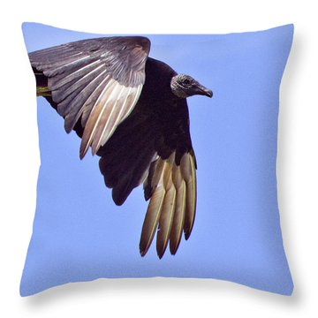 Black Vulture Throw Pillow by Roger Wedegis
