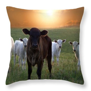 Blackie Throw Pillow by Bill Stephens
