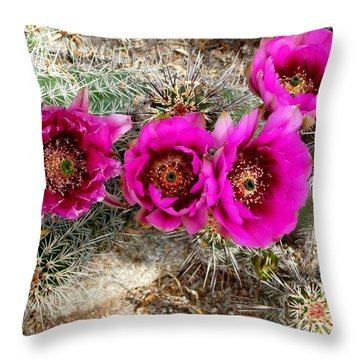 Throw Pillow featuring the photograph Blooming Cactus by Jo Sheehan