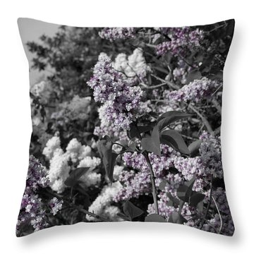 Throw Pillow featuring the photograph Blooms by Colleen Coccia