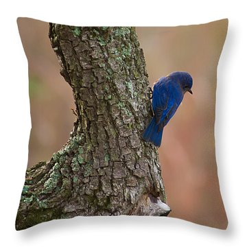 Blue Bird 2 Throw Pillow by Dan Wells