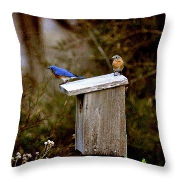 Blue Birds Throw Pillow by Todd Hostetter