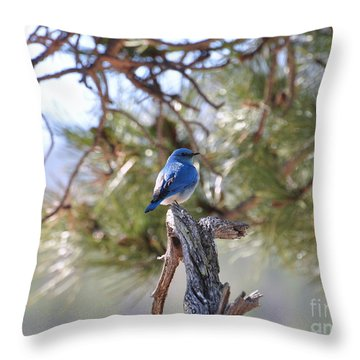 Blue Boy Throw Pillow by Dorrene BrownButterfield