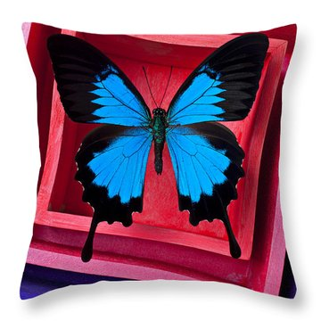 Blue Butterfly In Pink Box Throw Pillow by Garry Gay