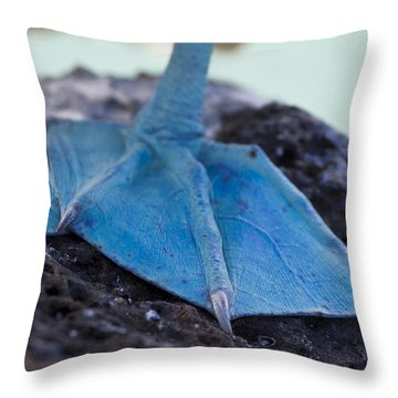 Blue Footed Booby Throw Pillow by Dave Fleetham
