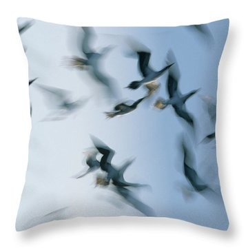 Blue-footed Booby Sula Nebouxii Flock Throw Pillow by Winfried Wisniewski