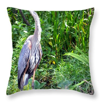 Throw Pillow featuring the photograph Blue Heron At The Everglades by Pravine Chester