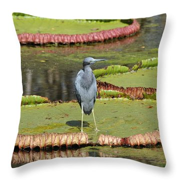 Blue Heron On Giant Lilly Pad Throw Pillow by Jodi Terracina