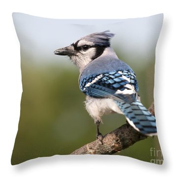 Throw Pillow featuring the photograph Blue Jay by Art Whitton