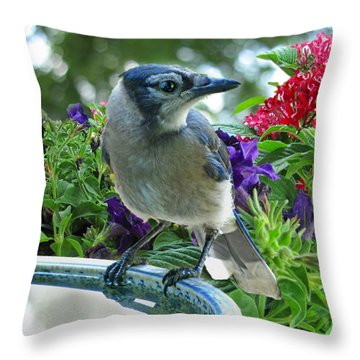 Throw Pillow featuring the photograph Blue Jay At Water by Debbie Portwood