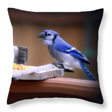 Throw Pillow featuring the photograph Blue Jay On Backyard Feeder by Kay Novy