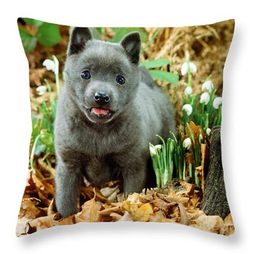 Blue Shipperke Throw Pillow by Jane Burton