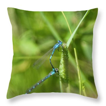 Throw Pillow featuring the photograph Blue Tailed Damsel Flies by Daniel Hebard
