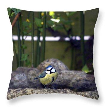 Blue Tit On Bird Bath Throw Pillow by Jane Rix