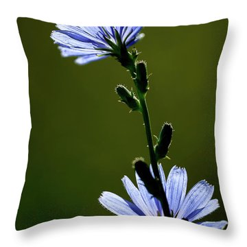 Blue Wildflower Throw Pillow by  Onyonet  Photo Studios