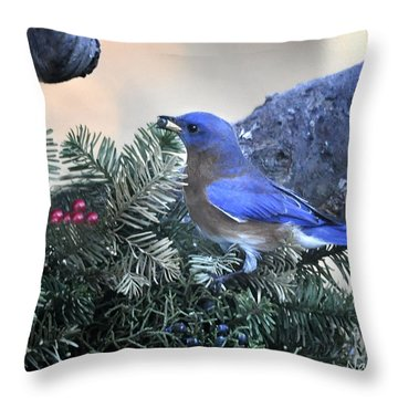 Throw Pillow featuring the photograph Bluebird Christmas Wreath by Nava Thompson